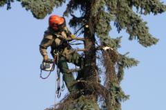 Rizikové kácení stromů Praha